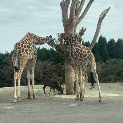 【リアル獣王】動物園がパチ屋でよく見る光景で草www