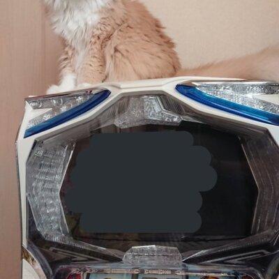 【提案】パチ屋にもこういう風に猫設置すれば6万とか負けても癒される